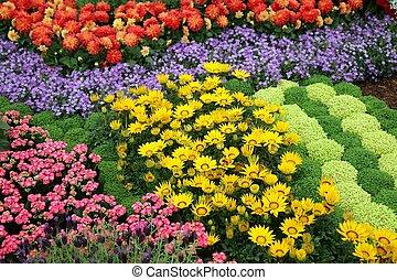 flores, em, jardim