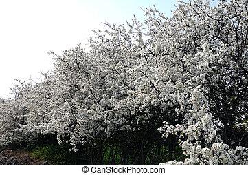 flores, em, primavera