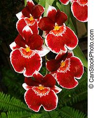 flores, em, um, famosos, jardim botanic