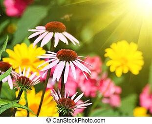 flores, em, um, jardim