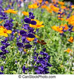 flores, em, verão