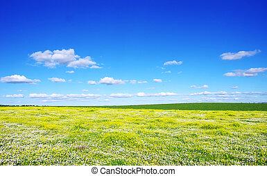 flores, en, campo, en, portugal