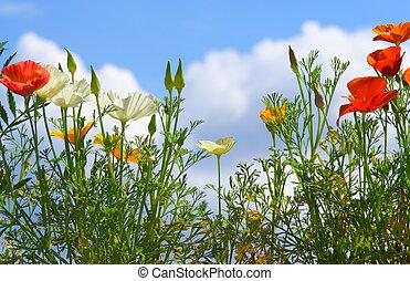 flores, en, cielo, plano de fondo