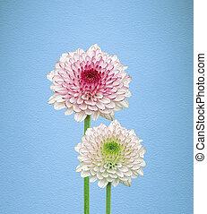 flores, en, fondo azul
