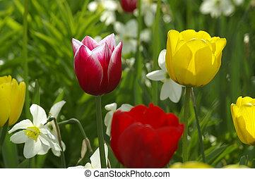 flores, en, jardín