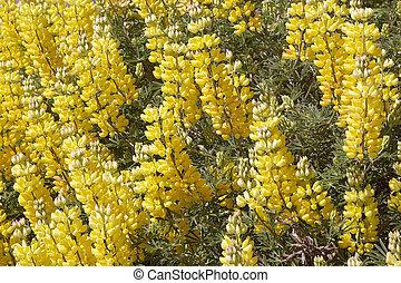 flores, en, patagonia, chile