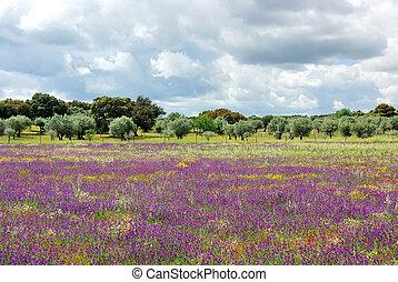 flores, en, portugués, campo