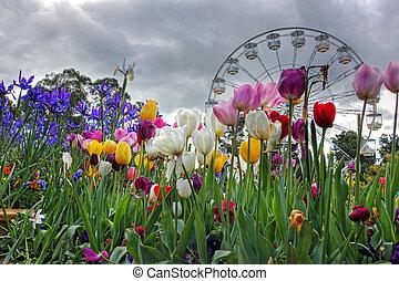 flores, en, primavera