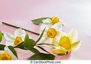 flores, en, un, fondo rosa
