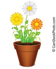 flores, en, un, pot.