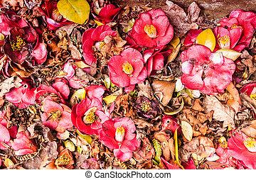 flores, experiência vermelha