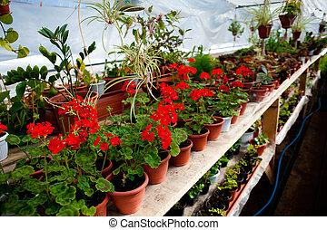 flores, filas, potes, centro jardim