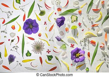 flores, florecer, colorido, patrón