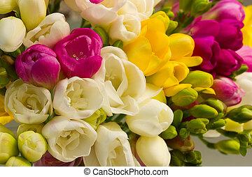 flores, florecer