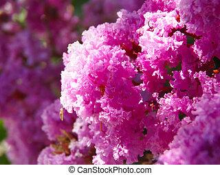 flores flowers flora