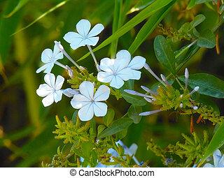 flores flowers - flores naturales
