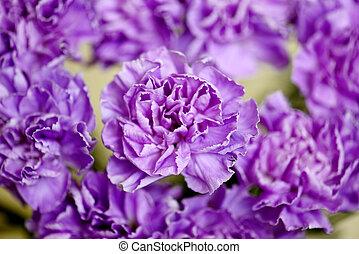flores, fondo.