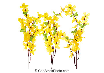 flores, forsythia