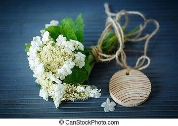 flores, fruta, viburnum
