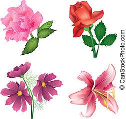flores, hermoso