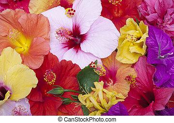 flores, hibisco