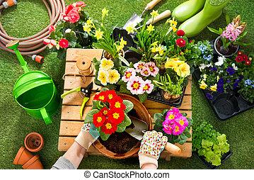 flores, jardim, potting