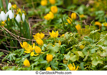 flores, jardim, springtime