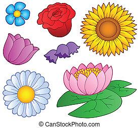 flores, jogo, vário