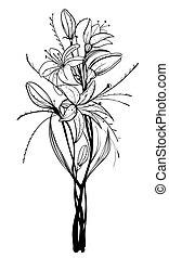 flores, lírio, esboço, ilustração