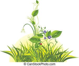 flores, ladybird, capim