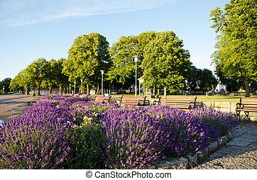 flores, lavendel