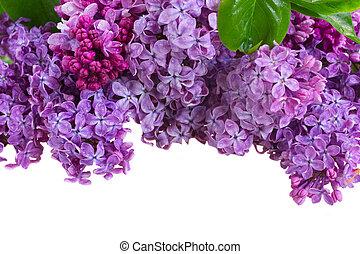flores, lilás