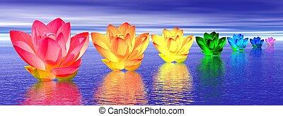 flores, lirio, chakras, noche