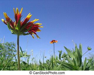 flores, manta