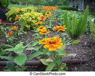 flores, maravilla