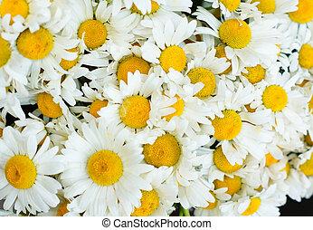 flores, margarita
