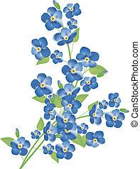 flores, miosótis