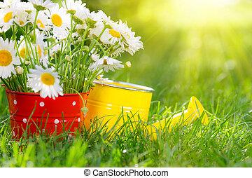 flores mola