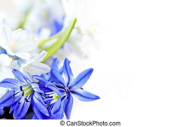 flores mola, fundo