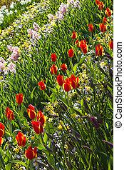 flores mola, jardim, fundo