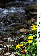 flores mola, montanhas., pequeno, amarela