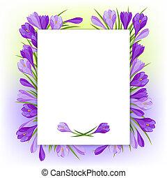 flores mola, natural, açafrão, experiência.