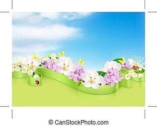 flores mola, nuvens