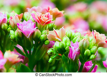 flores mola, páscoa, fundos, natureza