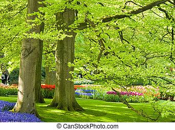 flores mola, parque, árvores