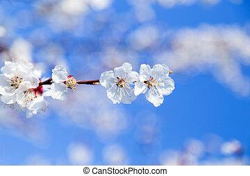 flores mola, ramo