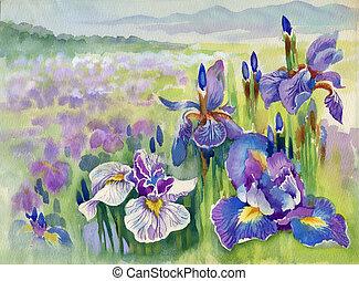 flores, montanha, violeta, primavera