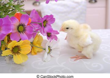 flores, olla, pollos