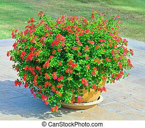 flores, ollas, rojo
