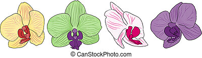 flores, orquídea, cuatro